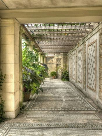 An old path with new plants in an old garden. HDR Hdr_Collection The Great Outdoors - 2015 EyeEm Awards The Five Senses Abandoned Places City Gardens Trellis Plants Garden Nature