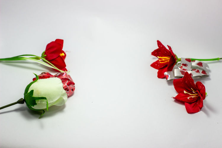 High angle view of red flowers on table