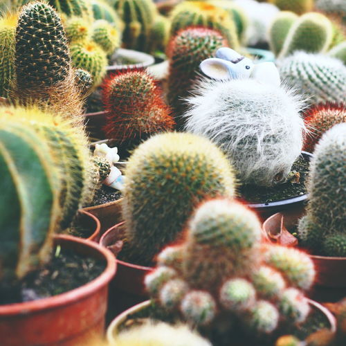 Beauty In Nature BYOPaper! Cactus Close-up Day Freshness Green Color Growth Nature No People Outdoors Plant Spiked Thorn