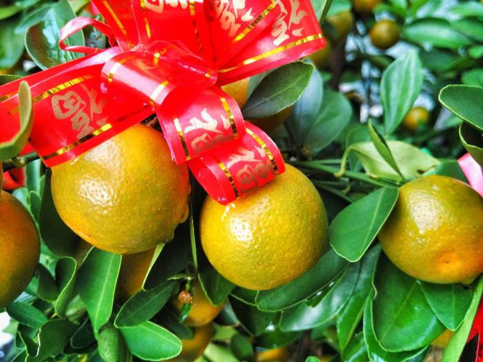 Red Fruit Leaf Freshness Close-up Green Color Outdoors Nature Day Beauty In Nature Chinese Plant Background Focus On One Lime Citrus  Citrus Fruit Chinese Lime Ribbon Red Ribbon Blessings Blessed  Bless Fortune