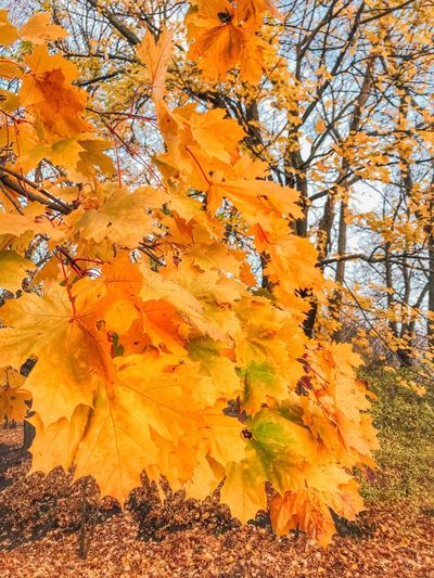 Tree Plant Change Autumn No People Orange Color Nature Plant Part Land Outdoors Growth Day Low Angle View Scenics - Nature Yellow Leaf Non-urban Scene Tranquility Branch Beauty In Nature