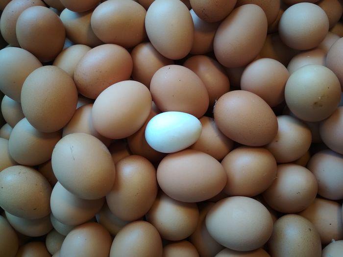 Egg Easter Egg Carton Biology Egg Easter Egg Close-up