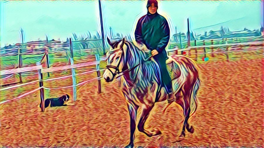 Horse Working Animal Domestic Animals Mammal One Animal One Person Day Sky Outdoors Motion Uniform Men Adult One Man Only Adults Only People Dogslife Horse Riding Horselife Horseriding Dressagehorse Animal Themes