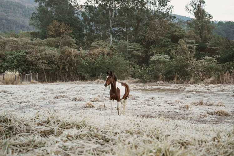 View of horse running on landscape