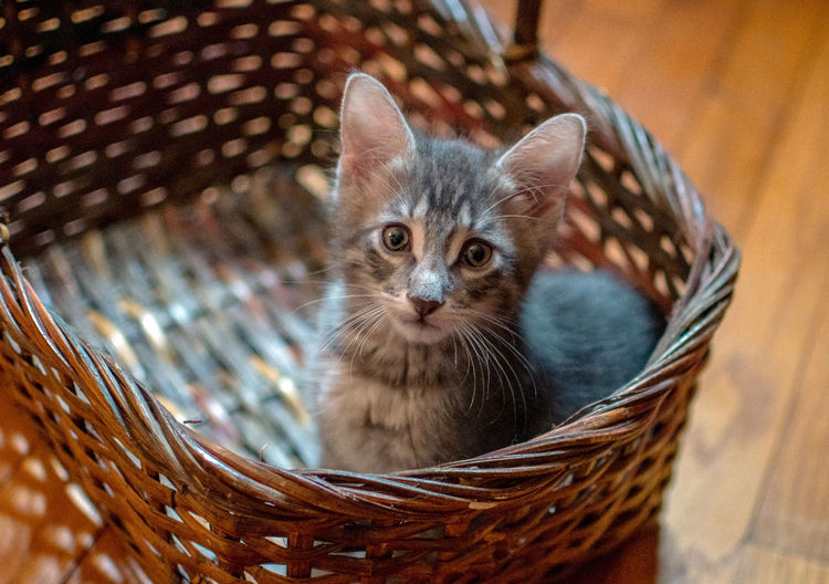 High angle view of kitten in basket