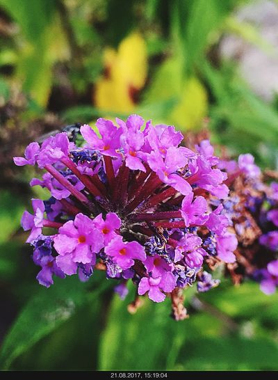 Flower Nature Beauty In Nature Growth Fragility Petal Focus On Foreground Day Freshness No People Close-up Outdoors Plant Pink Color Flower Head Pollination