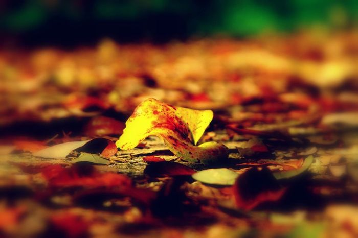 Leaf Spring Nature Leaves Autumn Colors Autumn Leaves Sidewalk Canonphotography Canon Taking Photos in a day of spring is where winter say good-bye