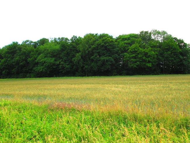 Campo Getreidefeld Landscape_Collection Landschaft Campos De Cereal Field Land Nature No People