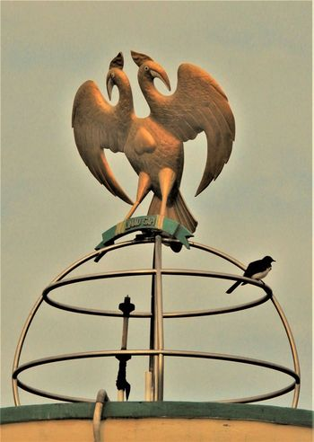 Animal Themes Bird Iconic Low Angle View Symbol Symbol Of Peace Symbolic  Ternate Island, Molucca