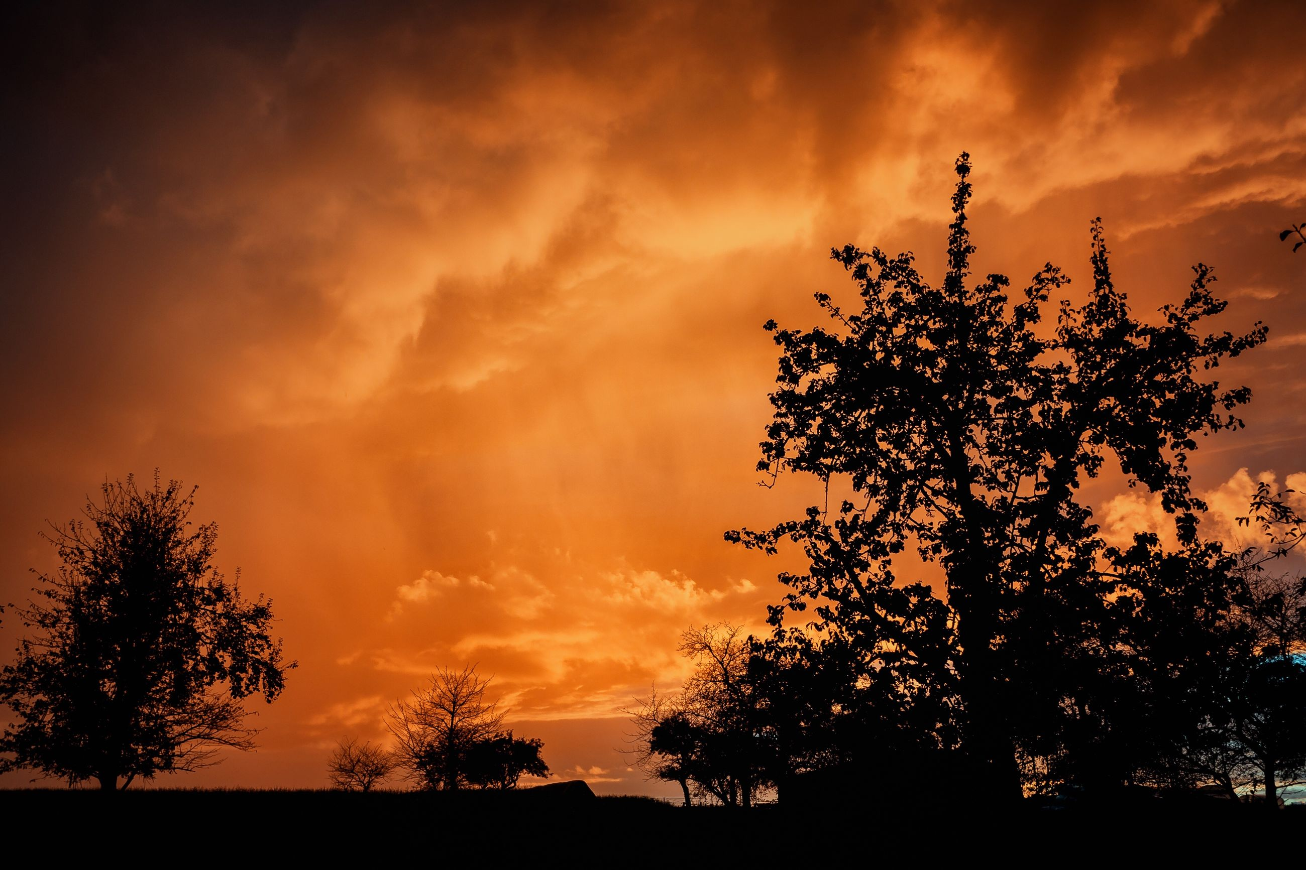 tree, silhouette, sunset, scenics, tranquil scene, beauty in nature, cloud - sky, sky, tranquility, growth, nature, cloudy, orange color, majestic, dramatic sky, field, atmospheric mood, outdoors, cloud, atmosphere, non-urban scene, dark, cloudscape, storm cloud, outline, no people, solitude, back lit
