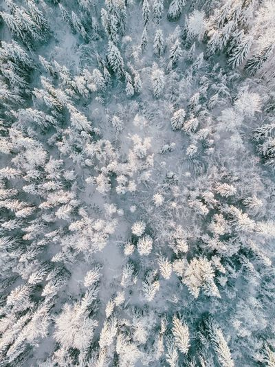 Forest Winter Trip christmas tree Full Frame Backgrounds Pattern No People High Angle View Day Textured  Nature Snow White Color Winter Natural Pattern Outdoors My Best Photo