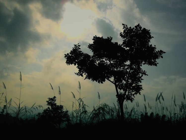 Tree Silhouette Learning Photography Phonetography Nature Zenfone5 Zen5