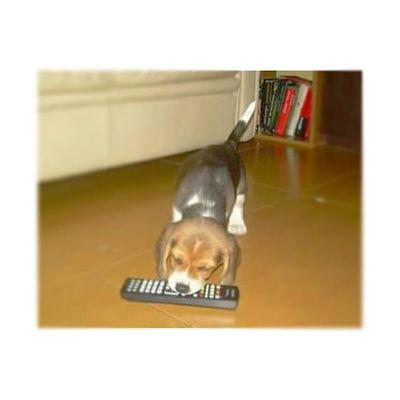 Shaggy 4YearsAgo pt.2 Beagle 🐶 ✌