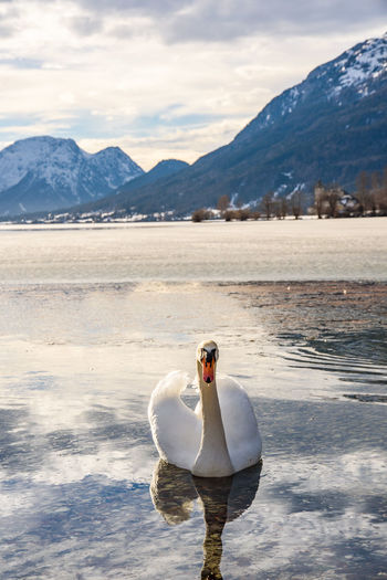 View of duck on snow covered mountain lake
