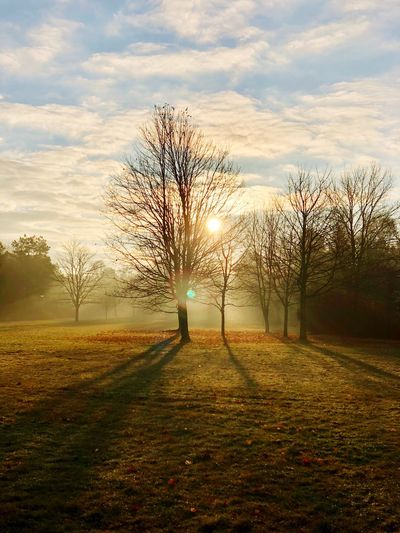Winter Sunrise Sunlight Morning Light EyeEm Nature Lover Cold Temperature Winterday Wintertime Sunrise Sunrise_sunsets_aroundworld Tree Nature Sky Grass Bare Tree Tranquility Beauty In Nature Tranquil Scene Field Scenics Landscape Cloud - Sky Outdoors Sunlight No People Branch Day