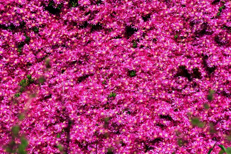 Sinop Cicekler 🌷 Flowers 🌹 Flowers