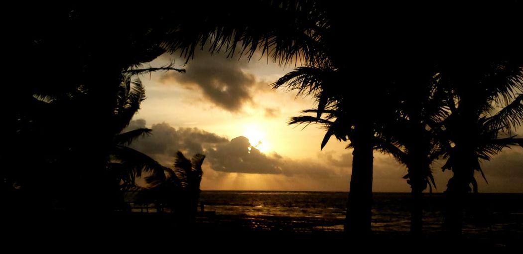 The Traveler - 2019 EyeEm Awards Tree Water Palm Tree Sea Sunset Beach Silhouette Tropical Climate Sky Horizon Over Water