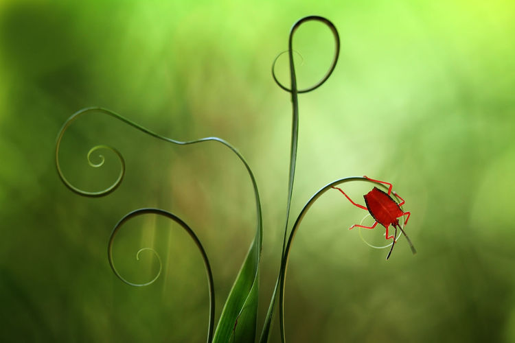 red bug on a