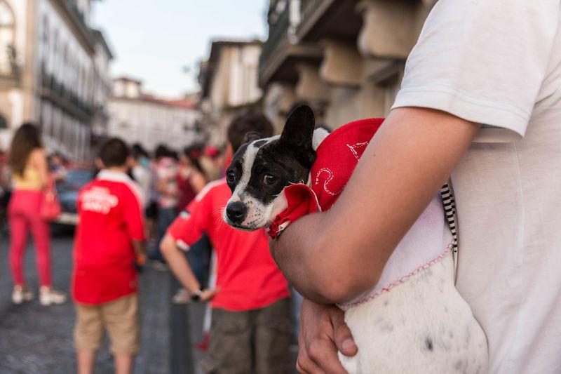 Ponte De Lima Benfica Suporter Dog Scary