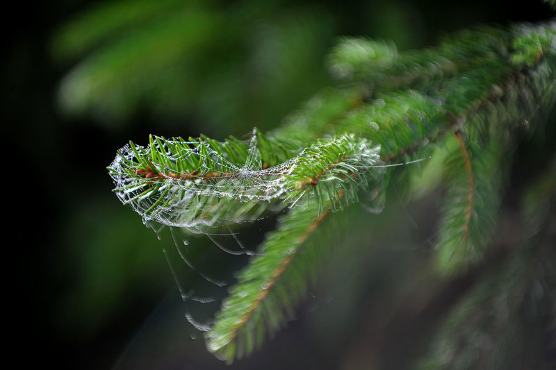 Lithuania Nature Animal Animal Themes Animal Wildlife Animals In The Wild Caterpillar Close-up Day Focus On Foreground Green Color Growth Insect Invertebrate Leaf Nature No People One Animal Outdoors Plant Plant Part Selective Focus