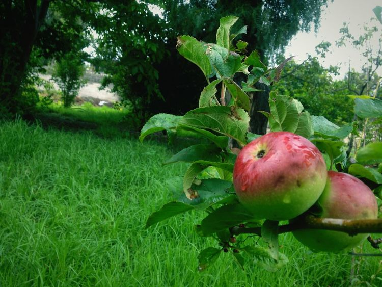 Macro Beauty Apple Tree Naturelovers Beautiful Nature First Eyeem Photo