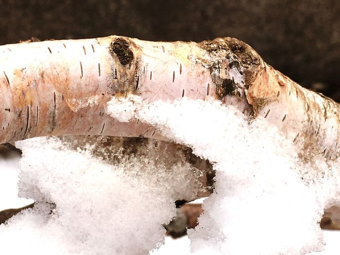 Close-up of icicles on log during winter