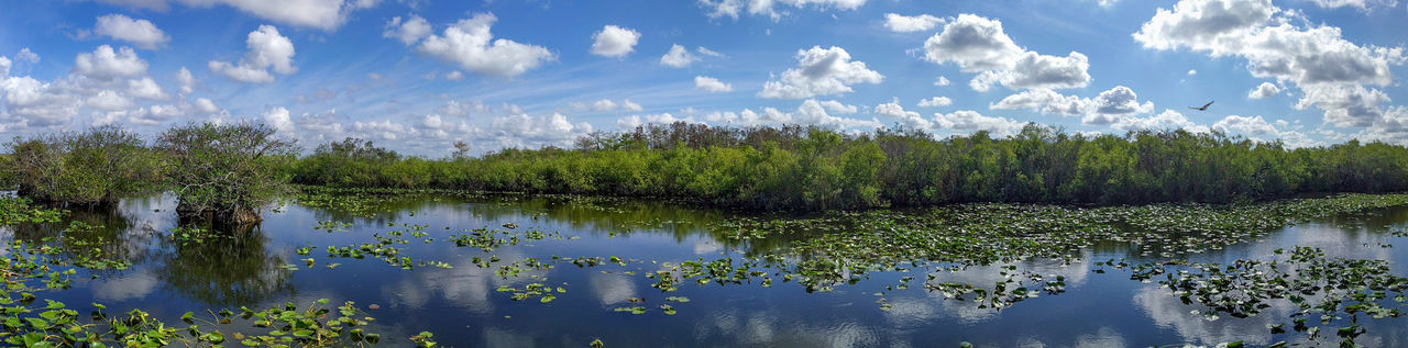 Anhinga trail wide landscape, everglades national park, florida