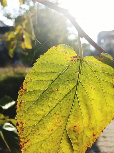 Leaf Nature Autumn Outdoors Day Green Color Beauty In Nature No People Close-up Sunlight Growth Freshness Fragility Water Sky Tree Where Turkey Manisa Alaşehir