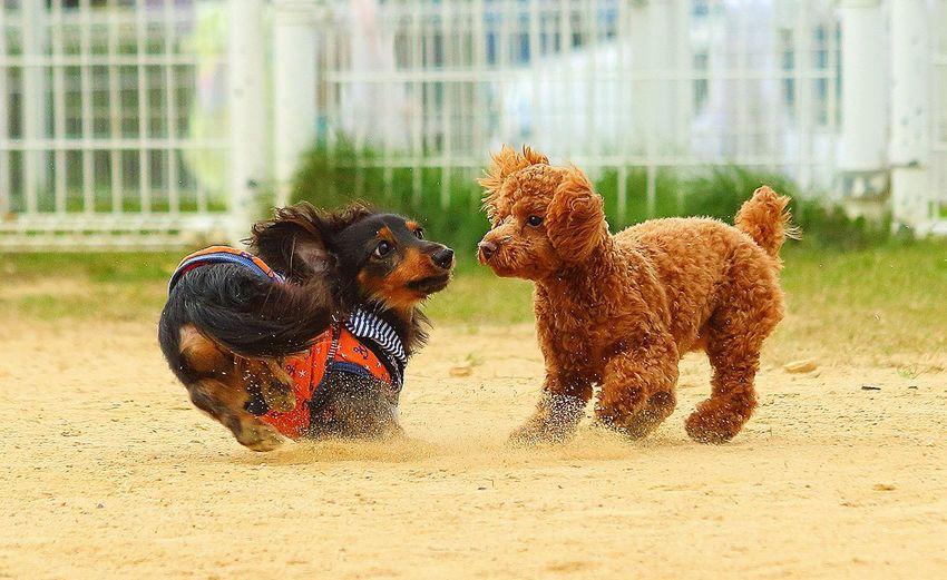 Dogs running on sand