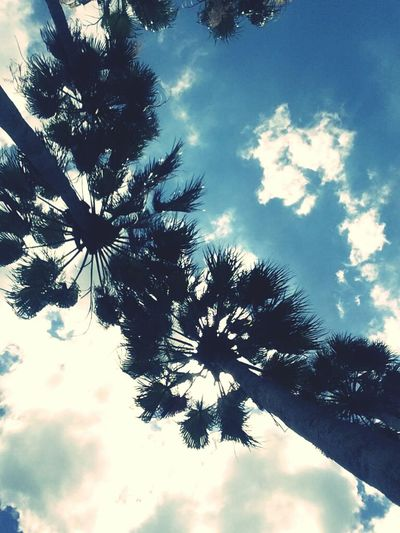 The life Palmtrees Sky Clouds And Sky GottaLoveFL