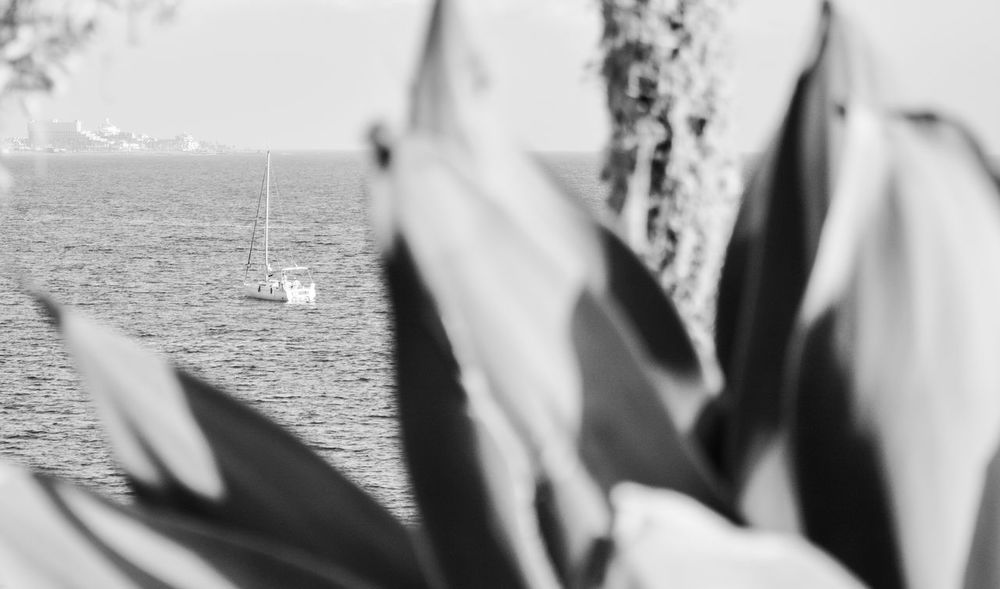 Black Black And White Blackandwhite Boat Canarias Canarie Canaries Canary Canary Islands Close-up Day Focus On Background Nature Outdoors Palm Palm Tree Real People Sea Selective Focus Tenerife Water