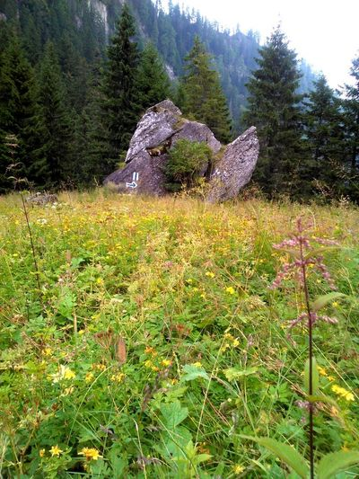 Glajarie Trail From Malaiesti Architecture Beauty In Nature Day Grass Growth Landscape Mountain Nature No People Outdoors Rocks In The Mountains Sky Tranquility Tree