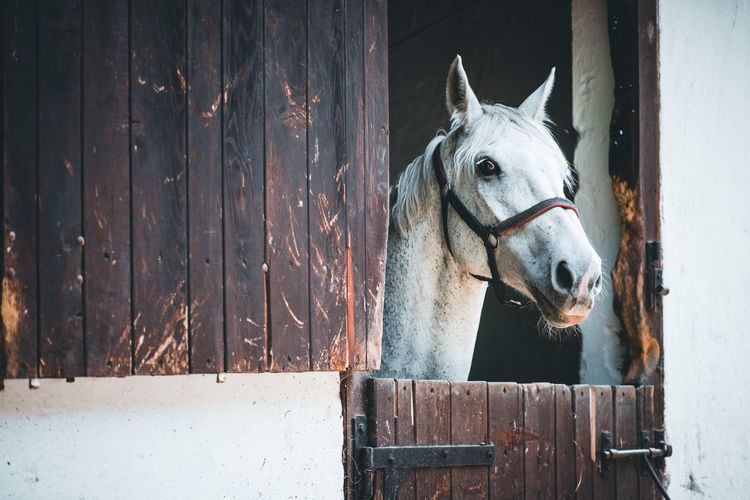 View of horse in stable