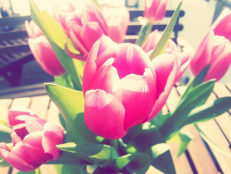 Spring Flowers Springtime