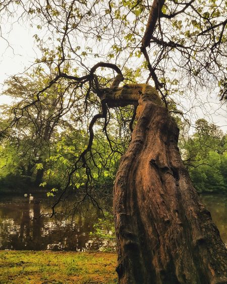 Texture Lake Summer Exploratorium Nature Tree Branch Tree Trunk Sky Growing Tranquility Calm Park - Man Made Space Shadow