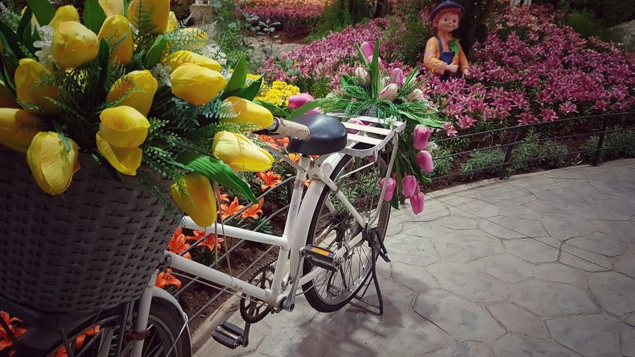 Bicycles on bicycle