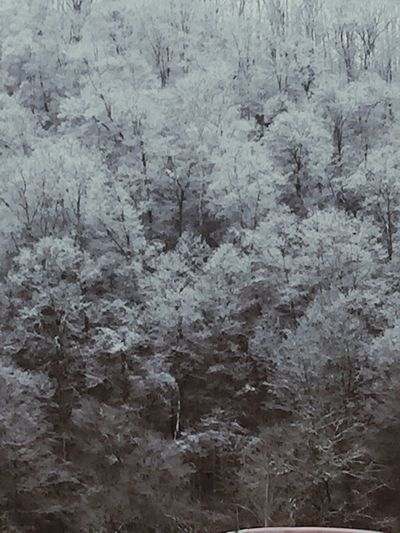 Check This Out Winter Wonderland Beautiful Nature