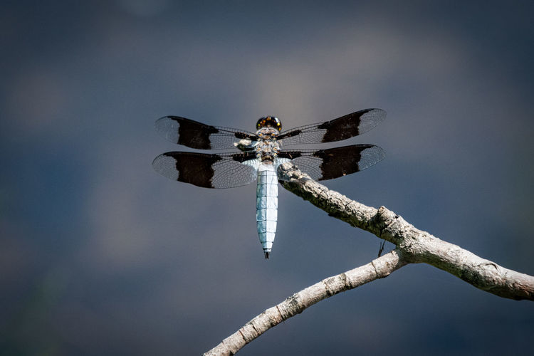 Low angle view of dragonfly on twig