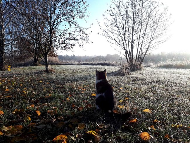 Yellow Leaves Trees Frost Frosty Icy Cold Temperature Winter Tree Bare Tree Sky Domestic Cat Cat Pets Feline Domestic Animals