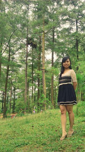 Malino Pohon Pinus Great Views in Sulawesiselatan INDONESIA