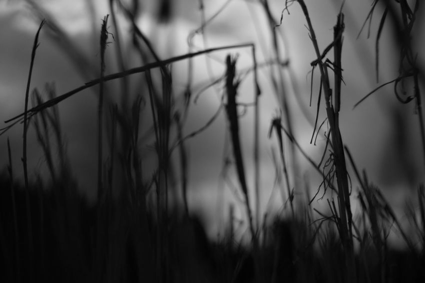 EyeEm Nature Lover Nature_collection Japan Pancolar 50mm F2 FUJIFILM X-T1 Carl Zeiss Jena Plant Blackandwhite Photography Black And White Photography Plants