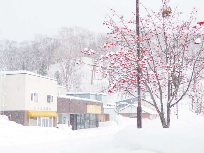 Snow covered cherry tree by building during winter