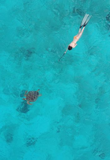 High Angle View Of Woman Swimming By Turtle In Sea