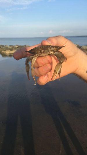 Crab Beach Beach Photography