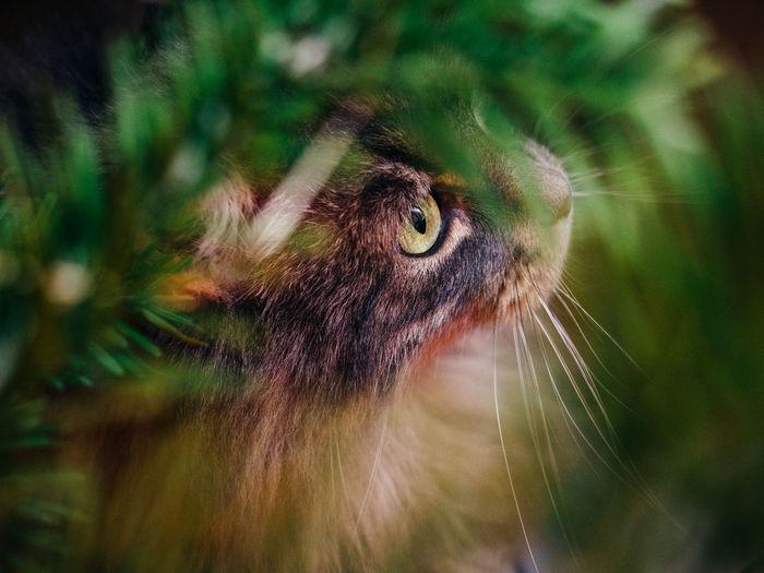 Mammal One