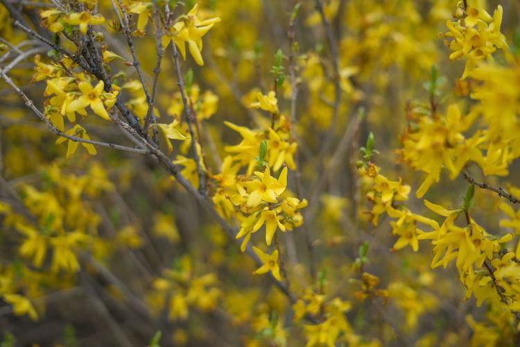 Wild yellow flower.