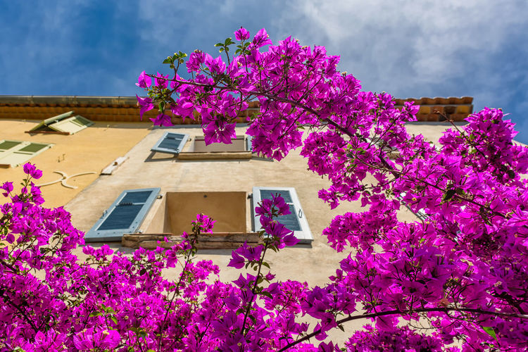 Welcome summer! Architecture Beauty In Nature Blooming Blossom Bougainvillea Branch Building Exterior Close-up Day Flower Flower Head Fragility Freshness Low Angle View Mediterranean  Nature No People Outdoors Petal Pink Color Provence Purple Sky Springtime Tree