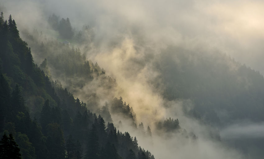 Morning fog drifts in the sunlight over the mountain forest Beauty In Nature Scenics - Nature Tranquil Scene Tranquility Tree Cloud - Sky Sky Plant Fog Non-urban Scene No People Nature Idyllic Low Angle View Day Mountain Forest Environment Outdoors Coniferous Tree Hazy  Alps EyeEm Nature Lover Nikon Nikonphotography EyeEm Nature Collection Nature Nature Photography Landscape Atmospheric Mood Foggy Morning Wanderlust Switzerland Alps Travel Photography Panoramic Landscape Climate Alpine Landscape