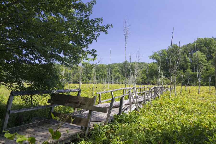 Calvert Cliffs Beauty In Nature Bridge Closed  Clear Sky Day Field Grass Green Color Growth Landscape Nature No People Outdoors Plant Scenics Sky Tranquility Tree