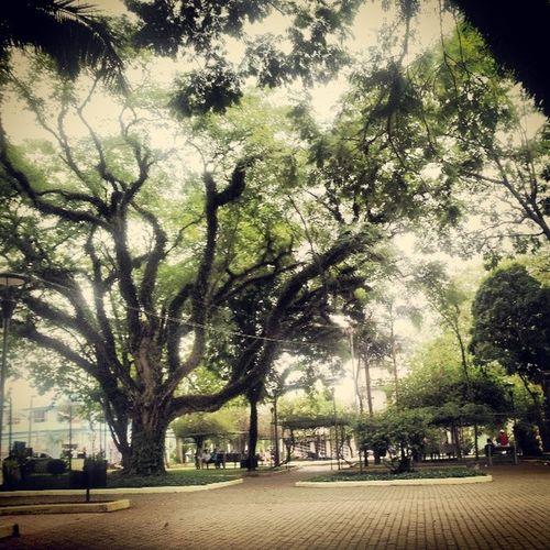 Arroiodomeio Praça  Green Passeio  arborizado árvores nature natureza